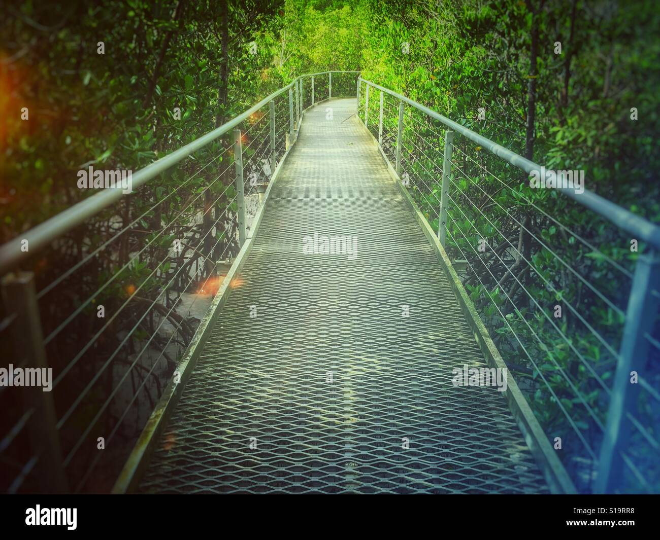 Walk in the mangrove. - Stock Image