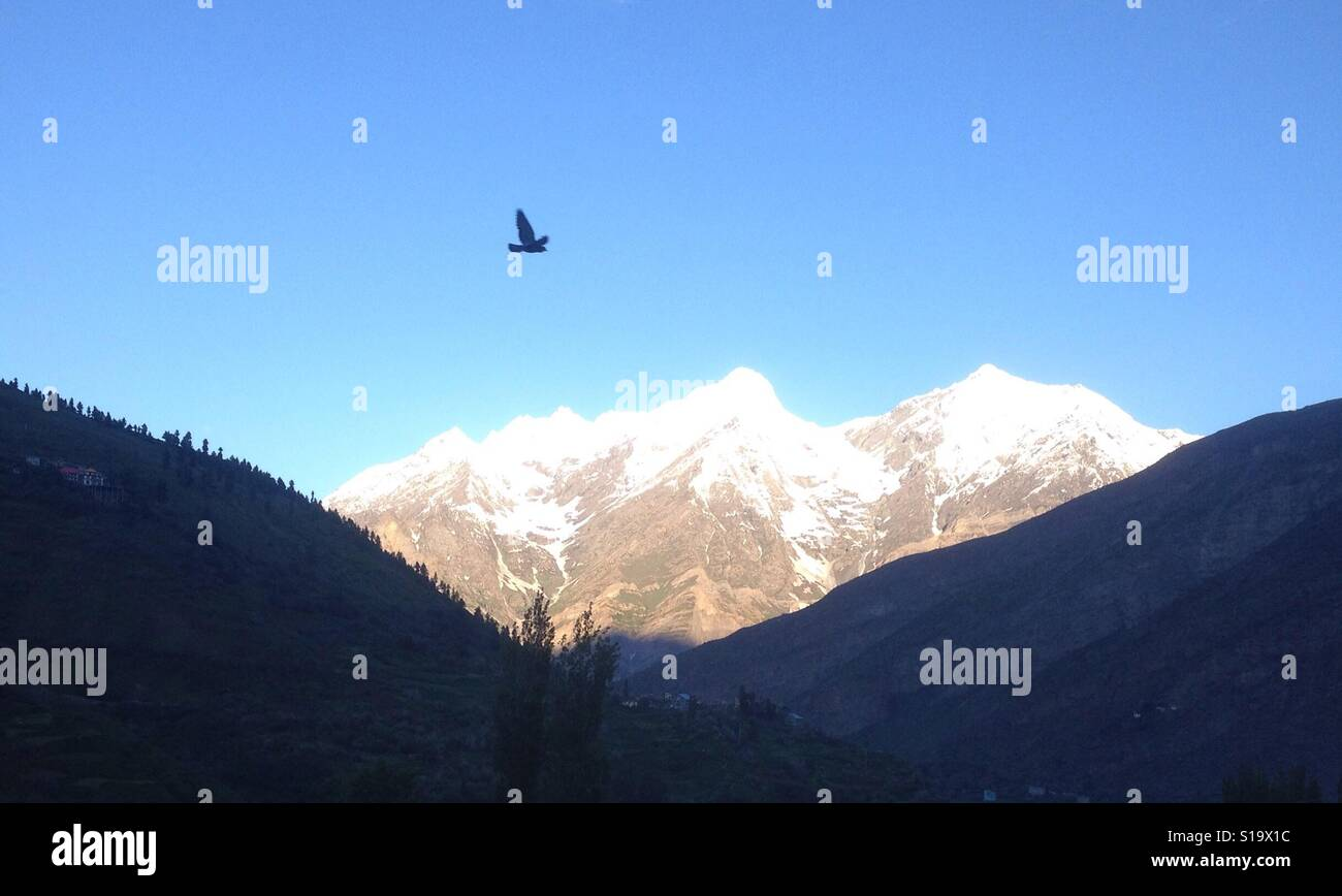 As I had a thought of climb that mountain, saw flying bird and instant & perfect click. Keylong, Himachal Pradesh - Stock Image