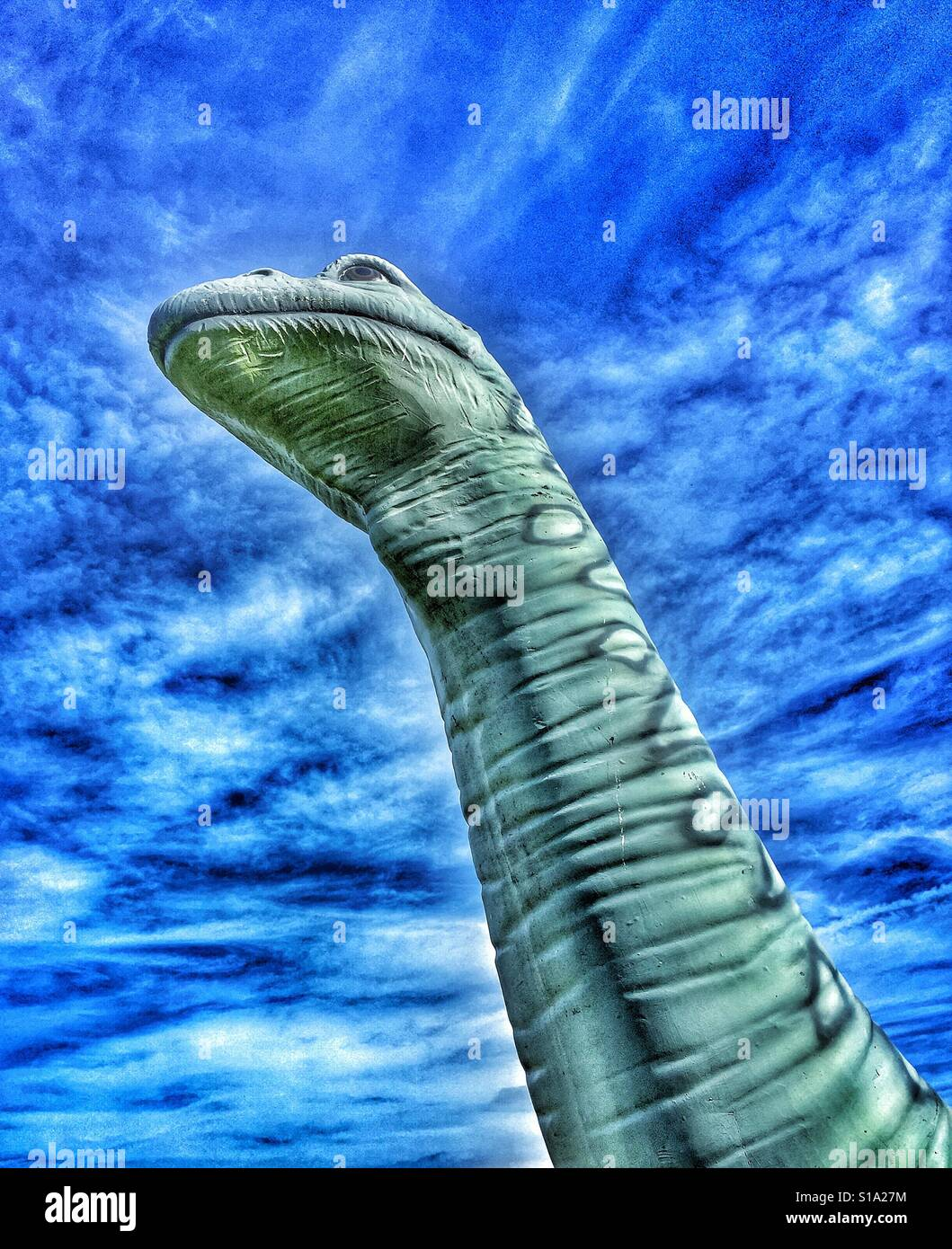 A colour iPhone photograph of a model Brachiosaurus (Sauropod) Dinosaur. This type of Dinosaur had a long neck and - Stock Image