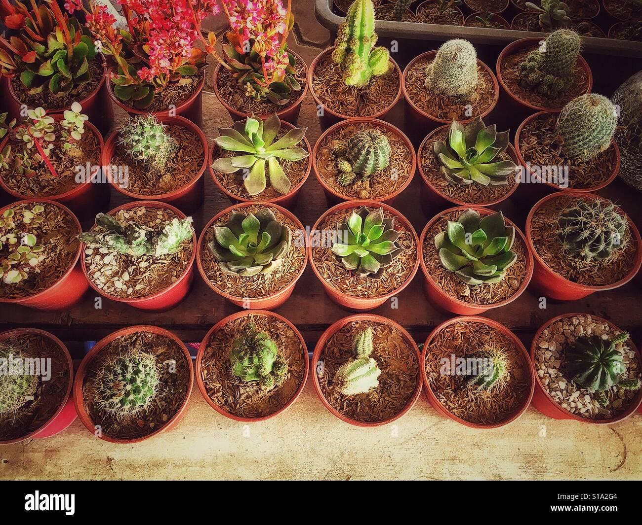 Indoor Succulents Stock Photos & Indoor Succulents Stock Images - Alamy