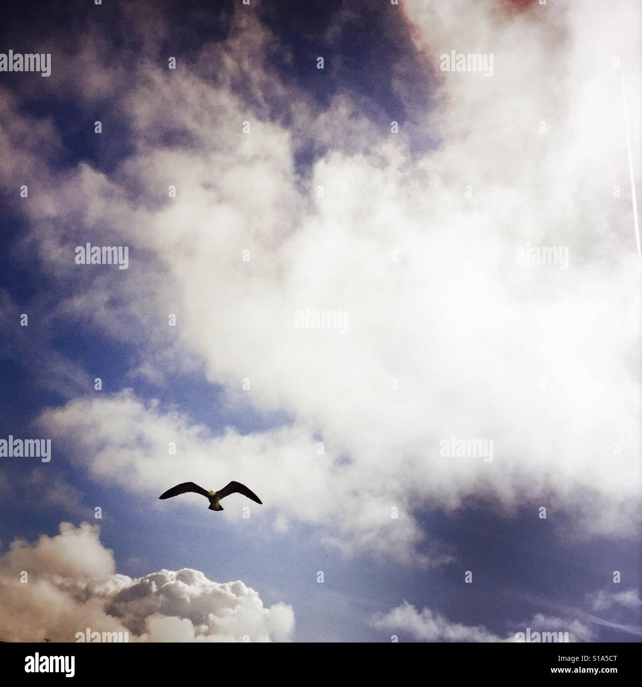 A seagull flying in the sky. - Stock Image