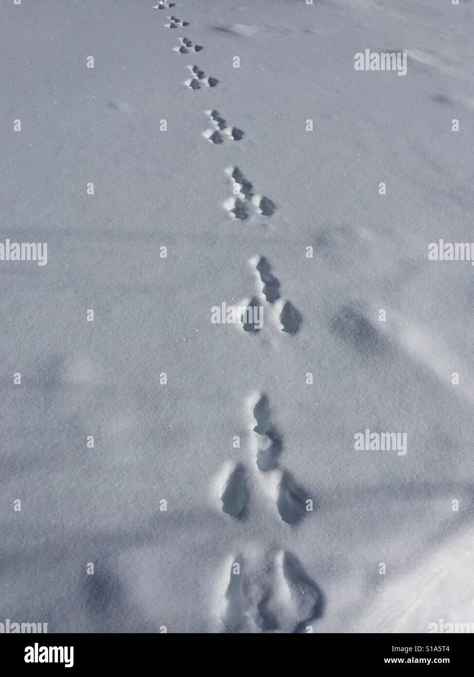 Tracks in the snow - Stock Image