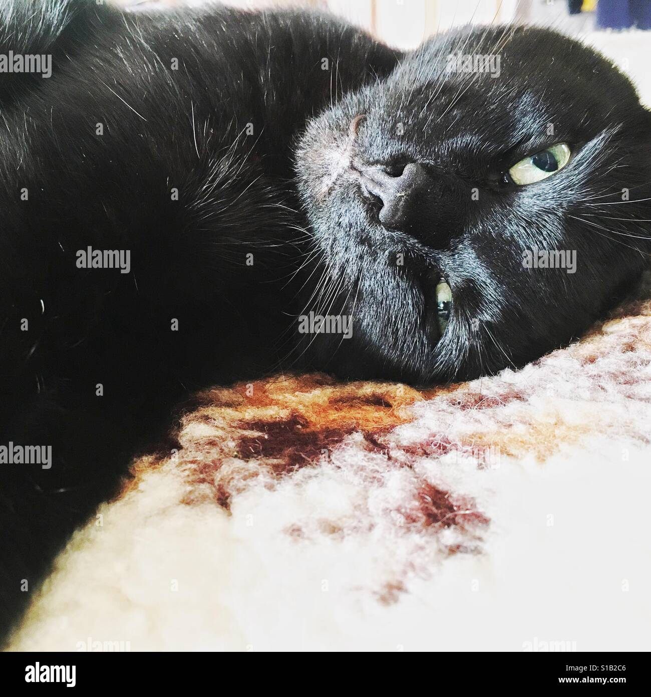 Black cat dozing on a bed - Stock Image
