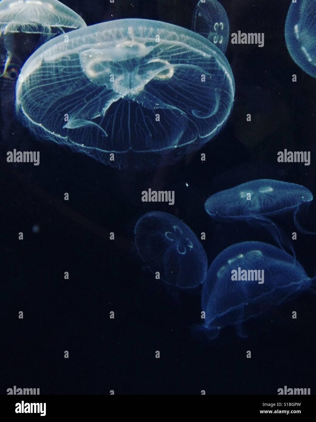 Jellyfish in Valencia - Stock Image