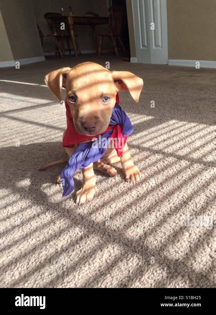 Puppy life - Stock Image