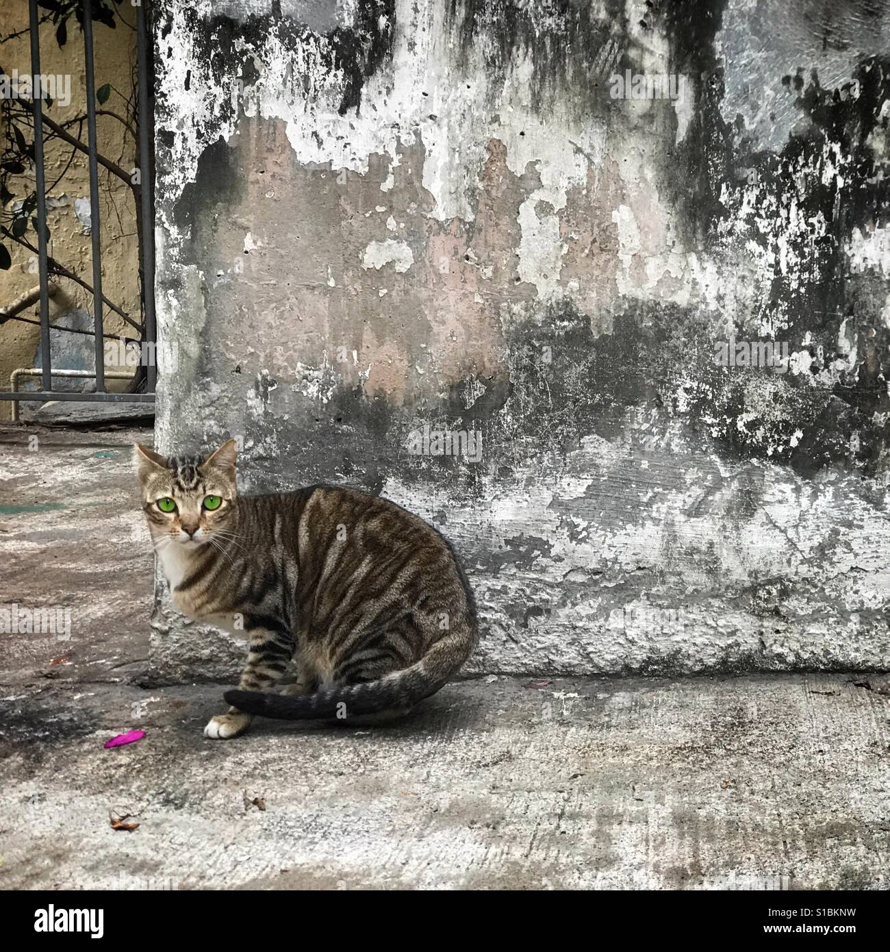 Sitting cat blending in with background Stock Photo