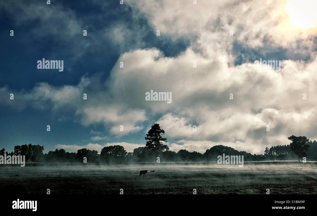 An early morning mystical shot with steam rising from a farm field; dark trees in the background as the sun shines - Stock Image