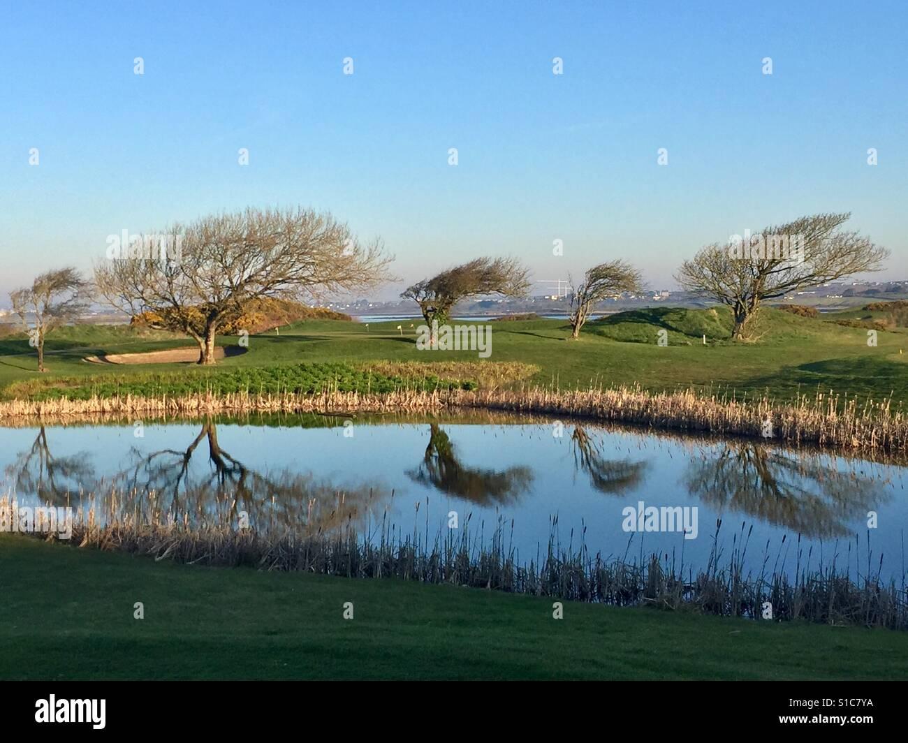 Reflecting on Windblown Trees, Ireland - Stock Image