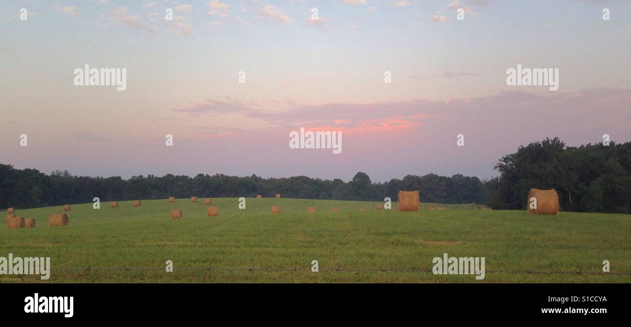 Hayfield on a midsummer's eve. - Stock Image