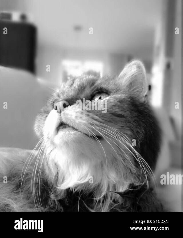 Meine Katze die nach draussen schaut Stock Photo