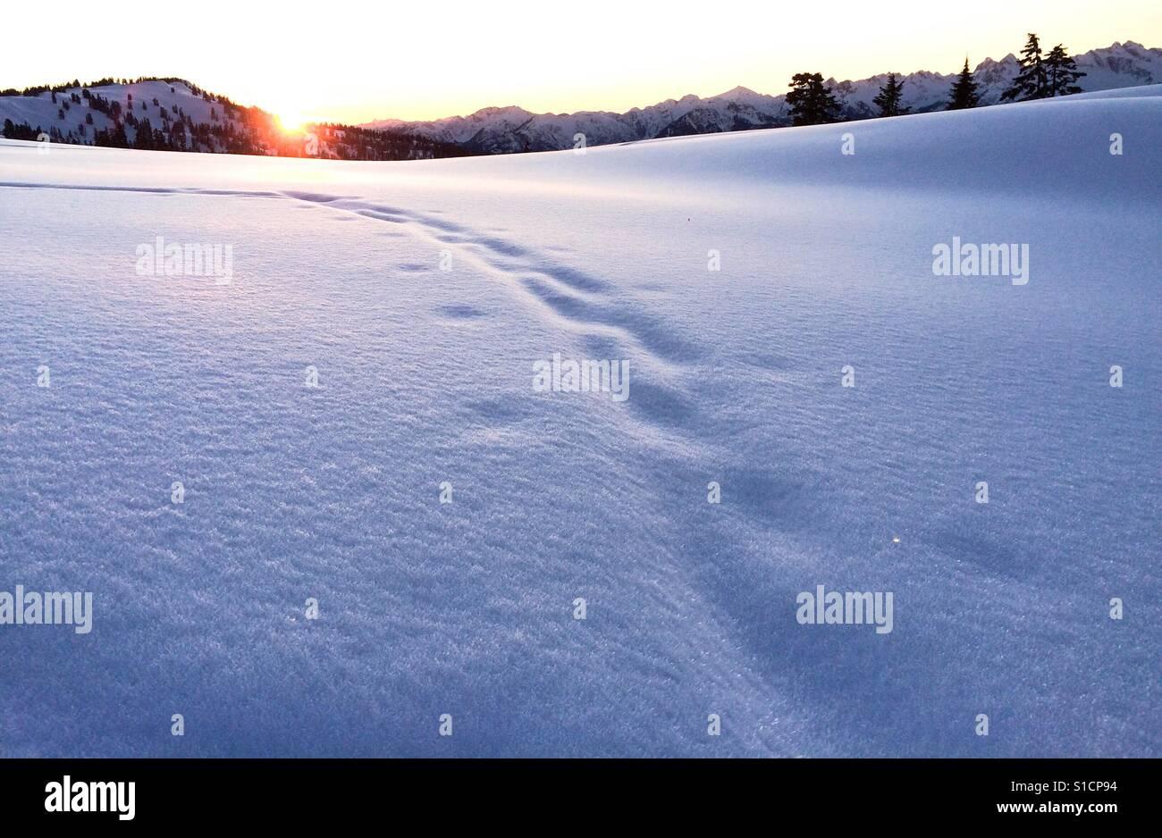 Sunsetting, Garibaldi Lake Provincial Park, BC Stock Photo