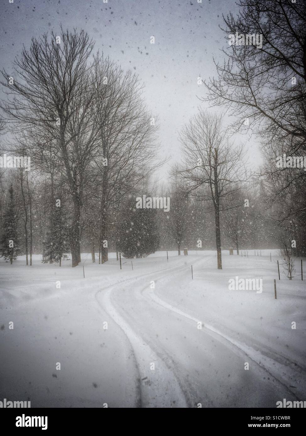 Snow fall on a winter day, tire tracks in the snow leading away. - Stock Image