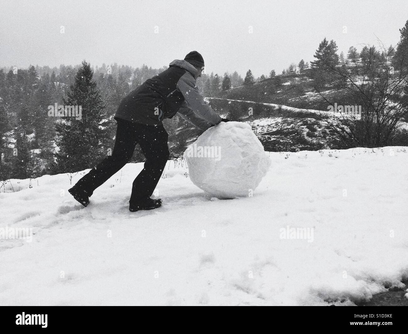 Young man rolling a large snow ball up a hill during a snow fall. In black and white. Room for copy. - Stock Image