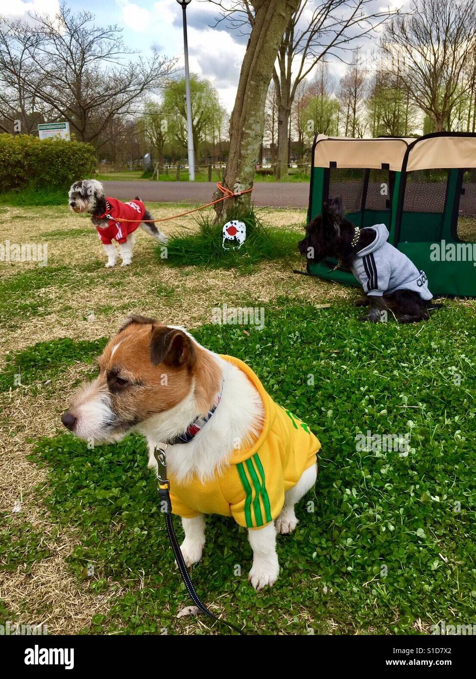 Dogs looking for someone who can play with - Stock Image