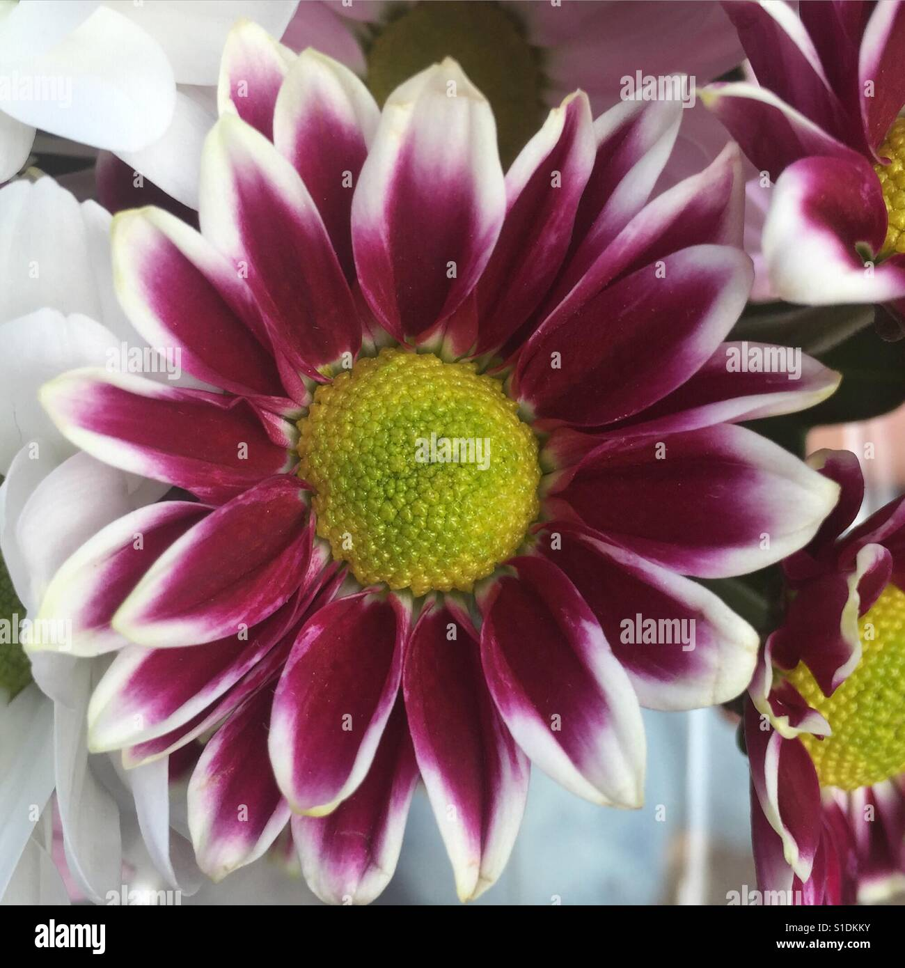 Beautiful single flower stock photo 310702111 alamy beautiful single flower izmirmasajfo