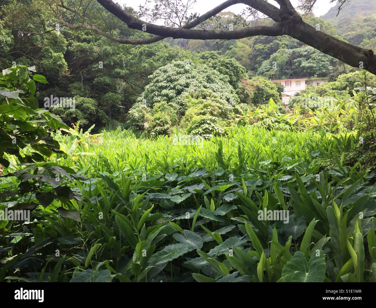 Green fields in Macau - Stock Image
