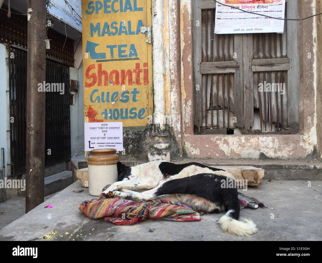 A dog sleeps in the street in Varanasi, India - Stock Image