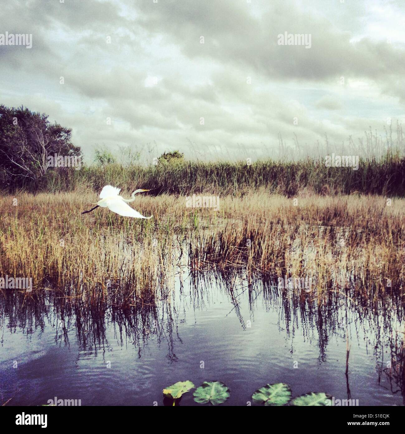 Swamp Life - Stock Image