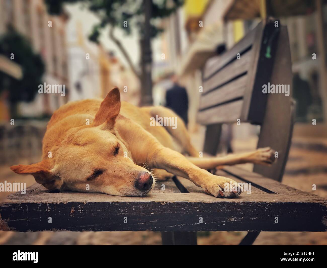 Dog asleep on a town bench - Stock Image