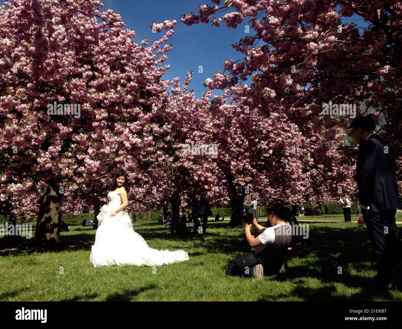 Paris Chinese Spring bride with Cherry blossom gardén being photographed - Stock Image