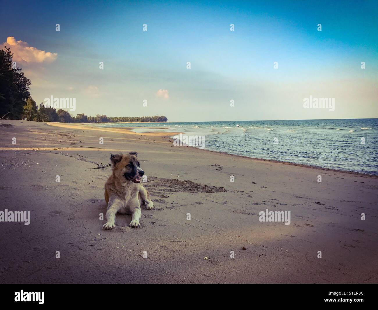 A dog on tropical sandy beach in Thailand Stock Photo