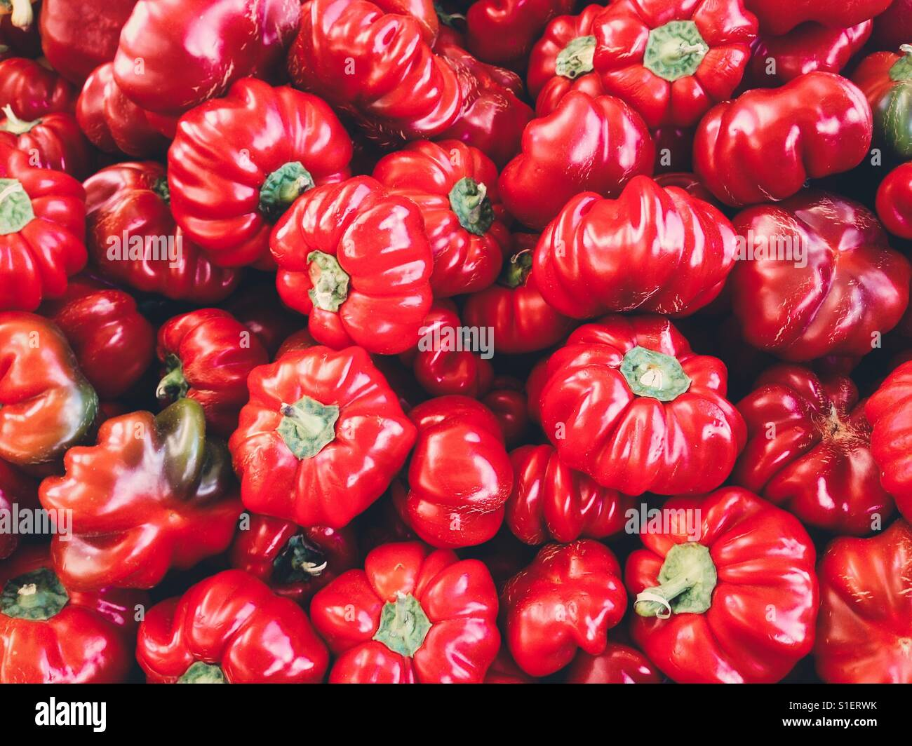 Farm fresh pimento peppers - Stock Image