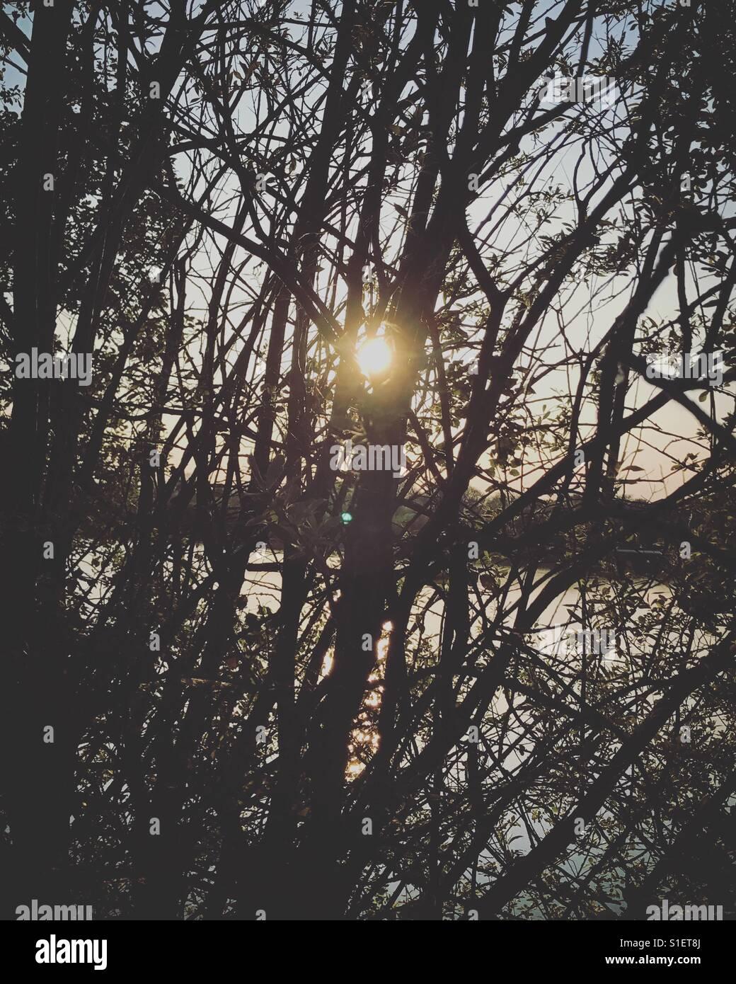 Sun creeping through the trees. - Stock Image