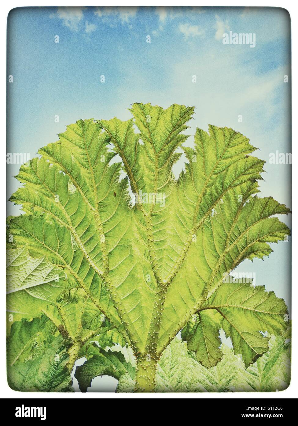 Day of the Triffids - Stock Image