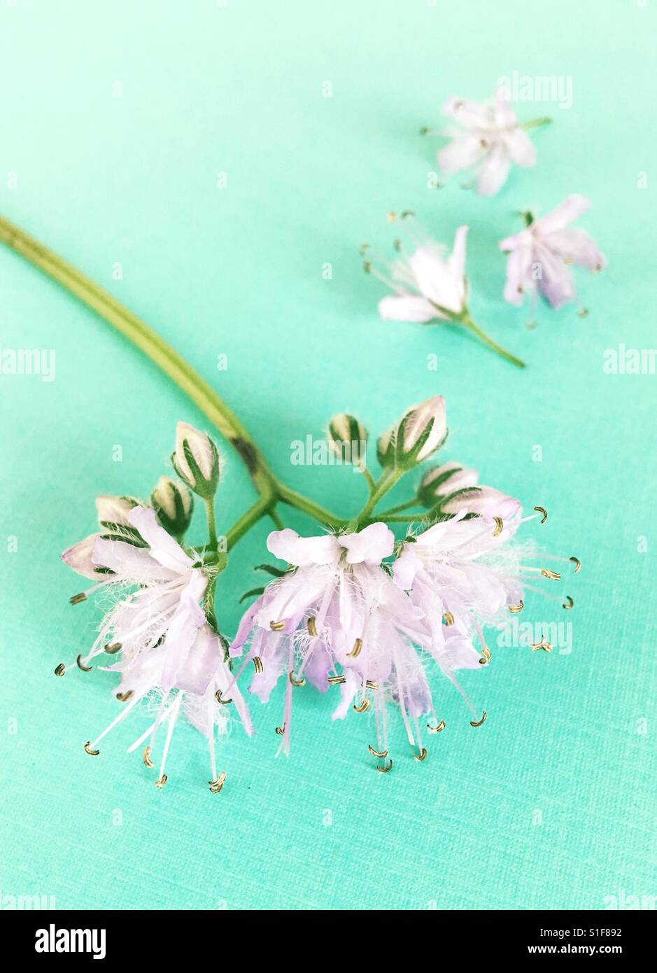 A flower with parts fallen off. - Stock Image