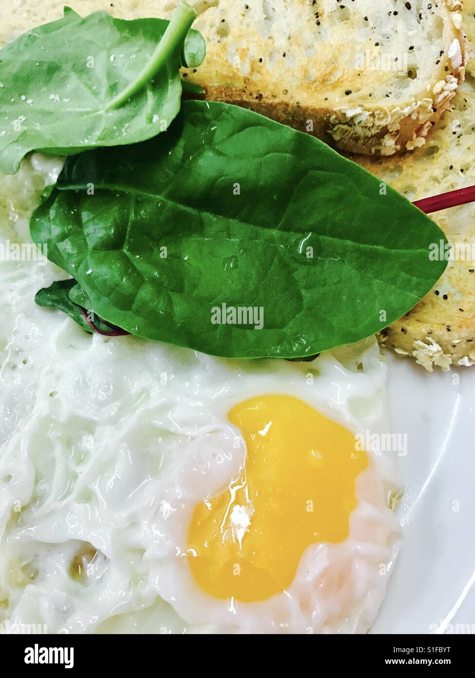 Fried eggs and brown toast - Stock Image