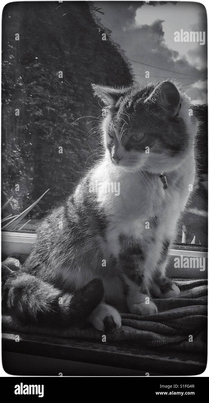 Cat sitting on the windowsill. - Stock Image