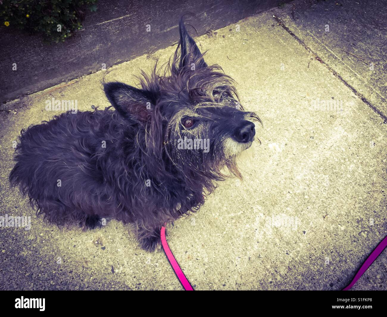 Small, old dog - Stock Image