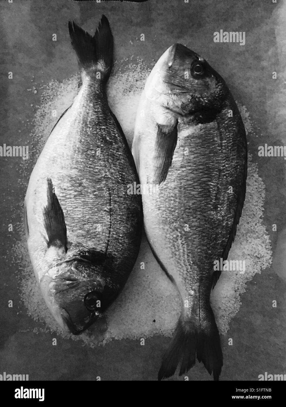 Sea Bream in Salt - Stock Image