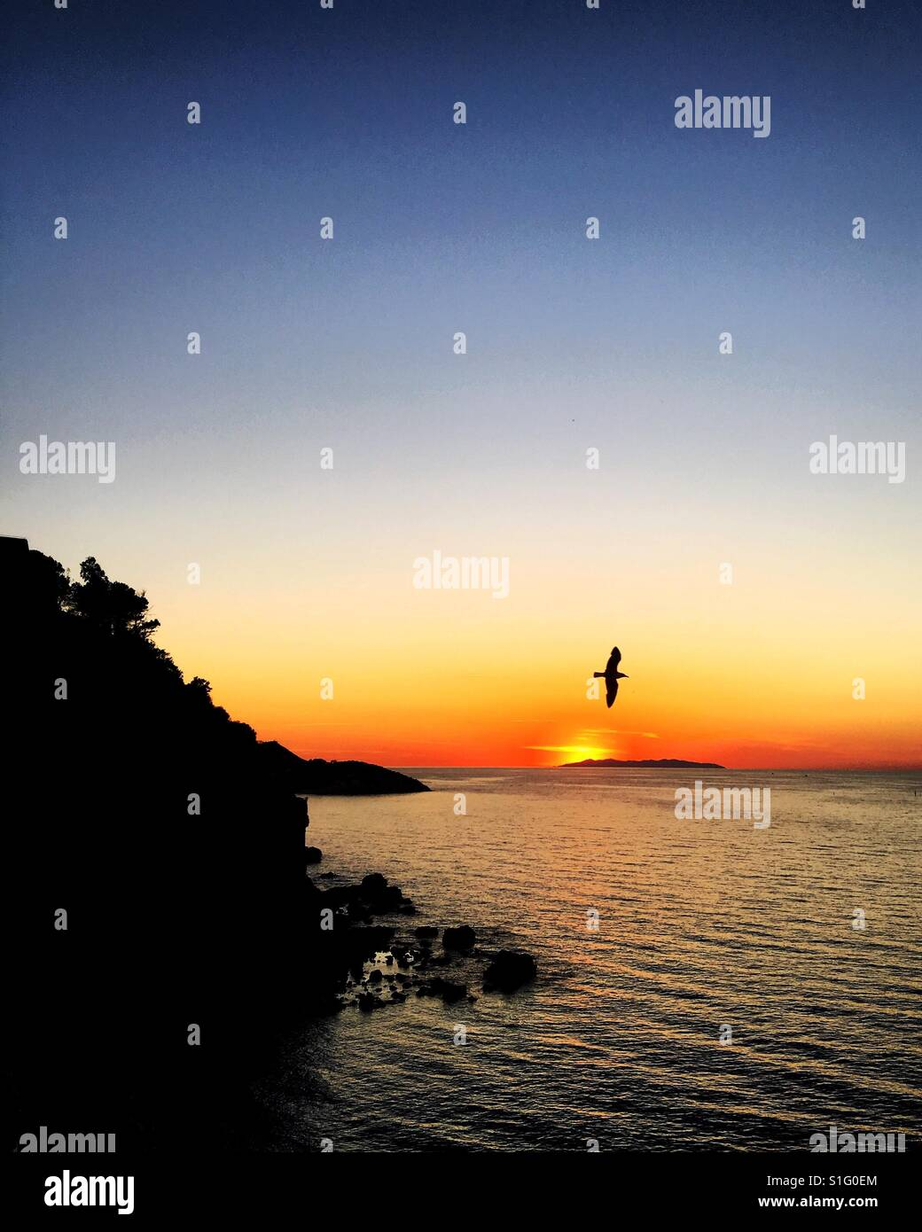 Seagull in the sunset with cliff silhouette on Isola d'Elba, Italy. - Stock Image