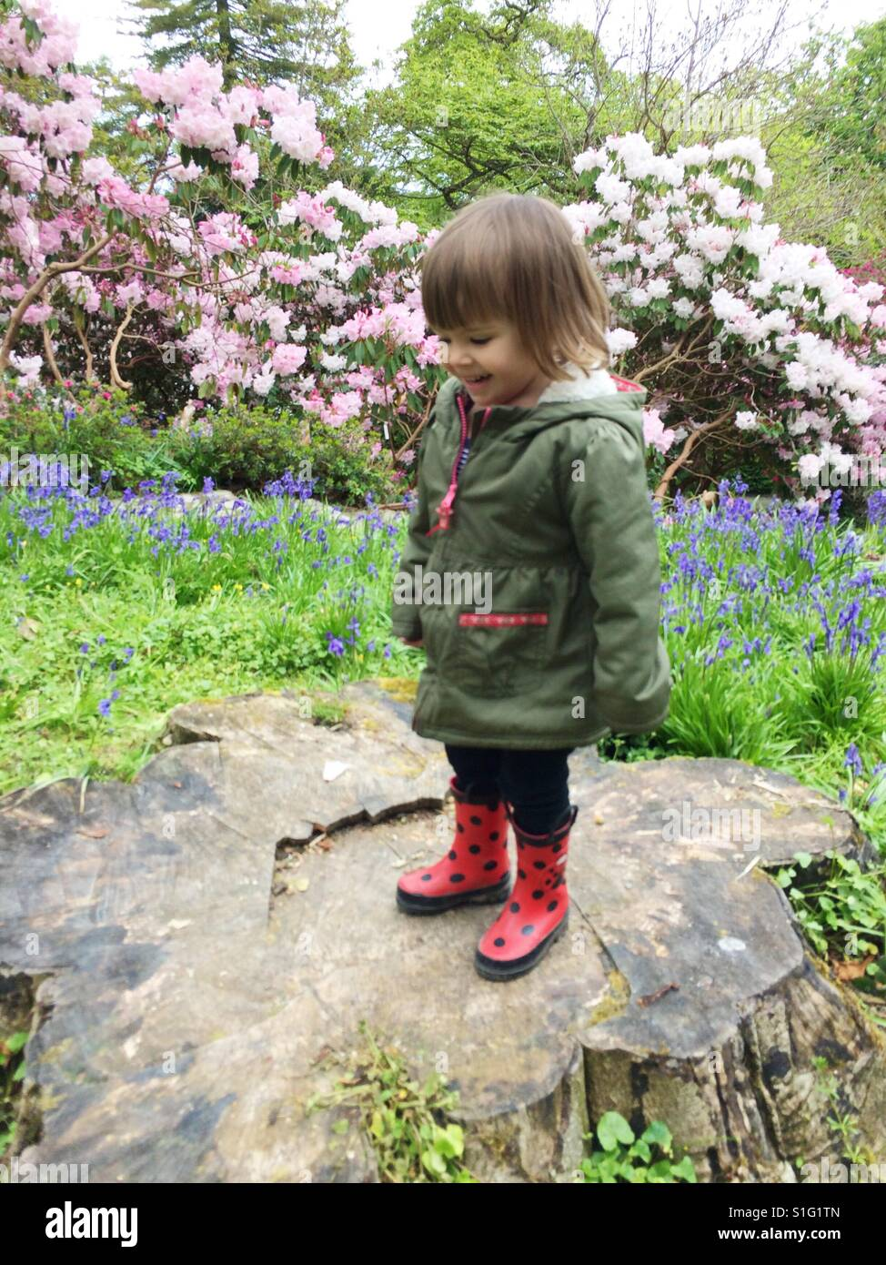 Toddler girl in rain boots playing in flower garden - Stock Image