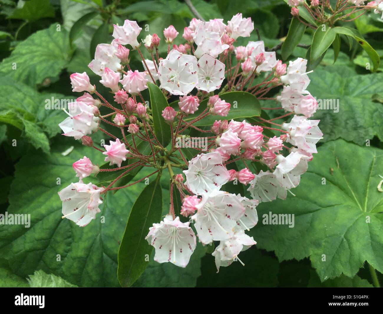 Tiny pink flowers stock photos tiny pink flowers stock images alamy tiny pink flowers stock image mightylinksfo