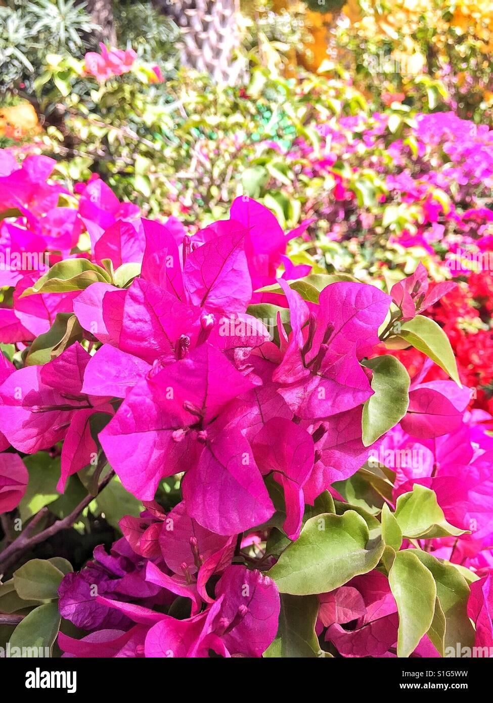 Spring flowers under sun Stock Photo