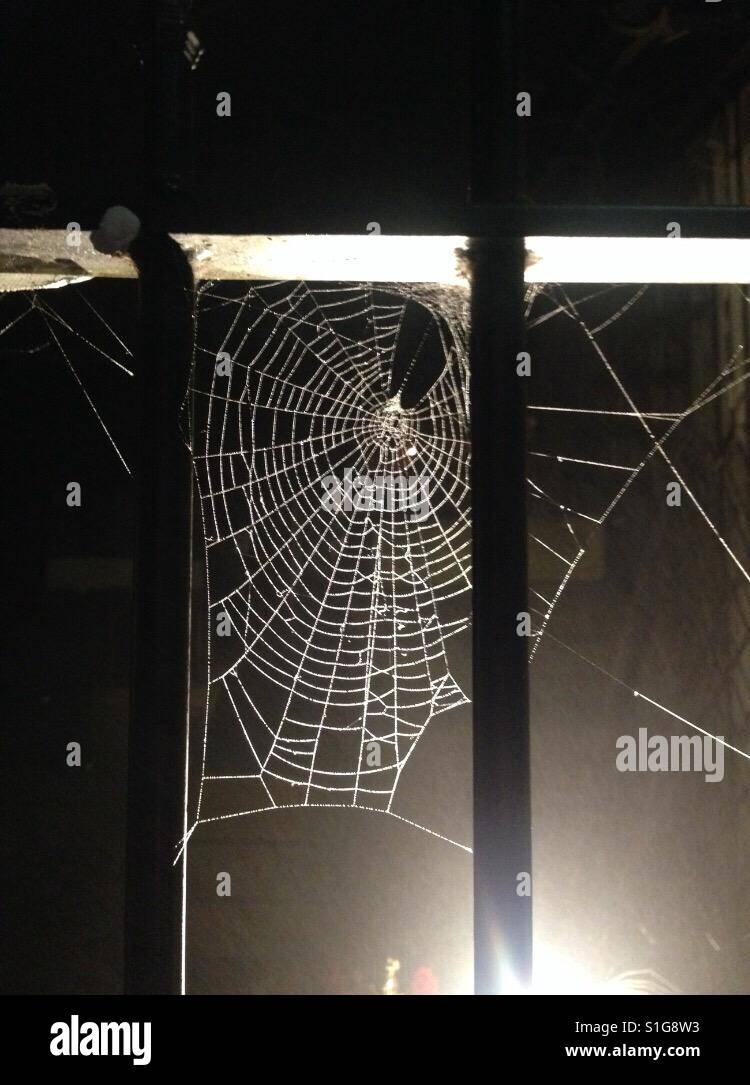 Spider's web - Stock Image