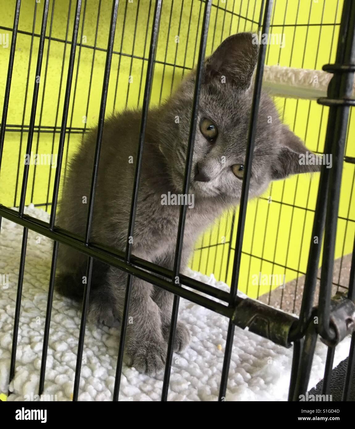 Kitten I n cage waiting adoption - Stock Image