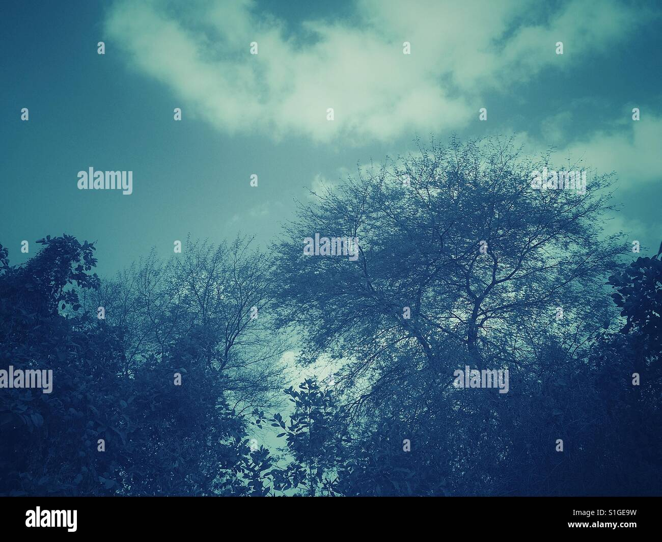Trees and overcast sky - Stock Image