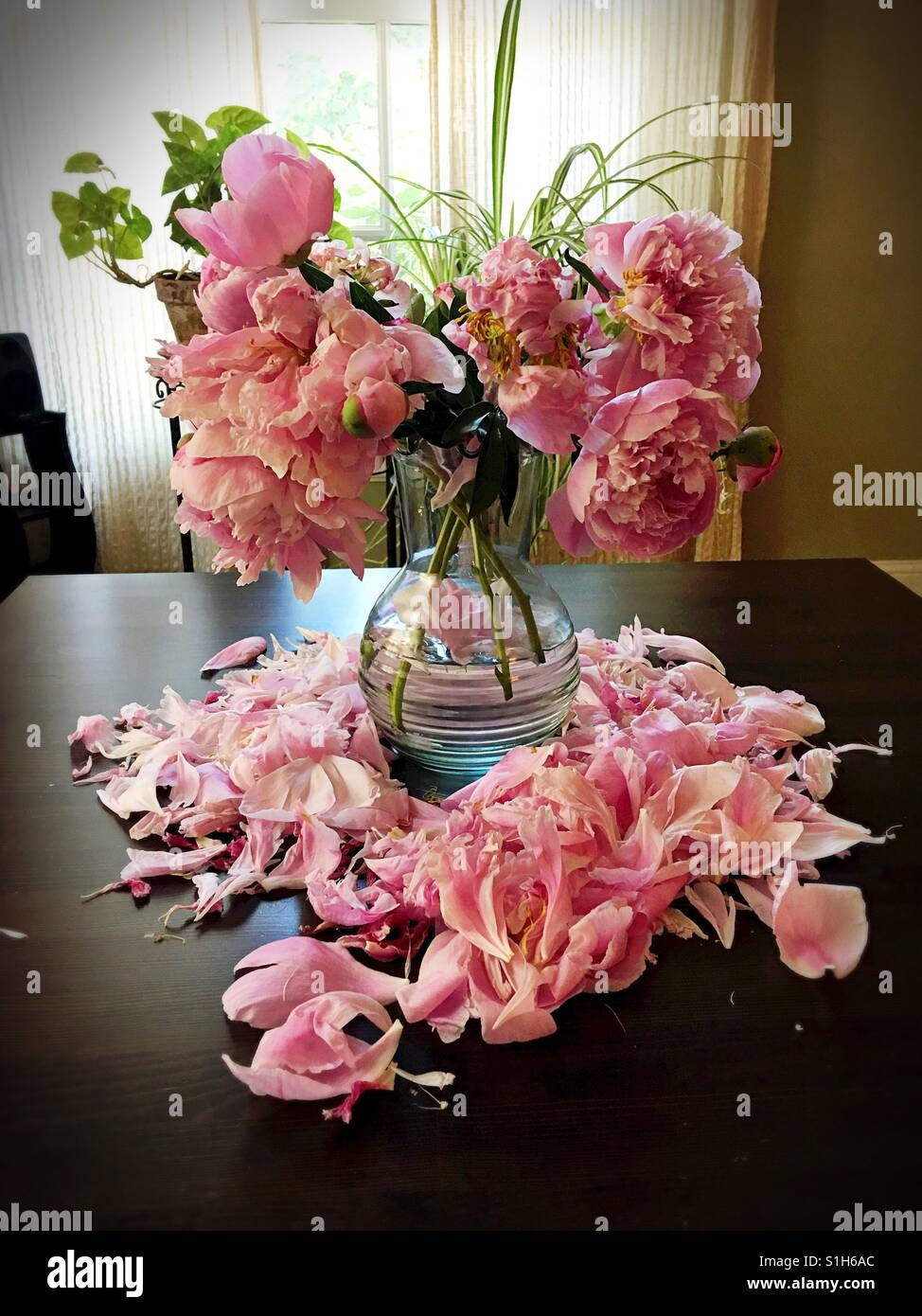 Flowers Dying Stock Photos & Flowers Dying Stock Images - Alamy