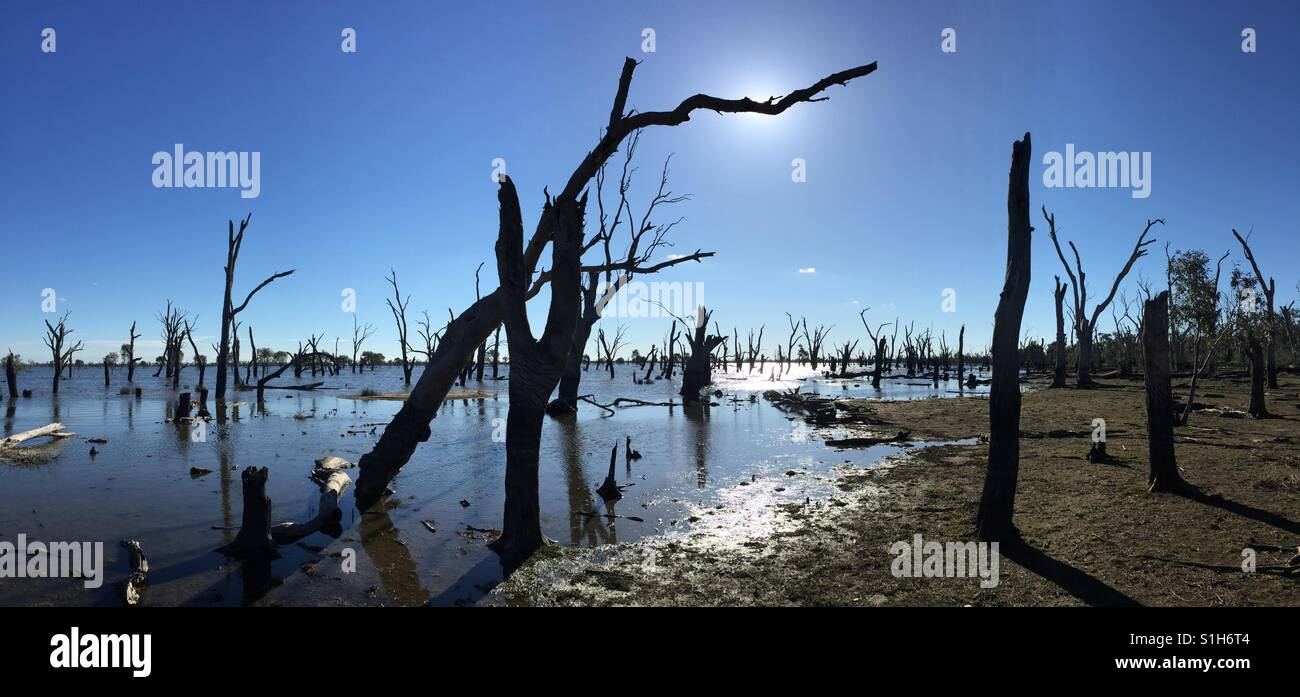 Dead trees, water and reflections at 'The Marsh' near Kerang, Victoria, Australia - Stock Image