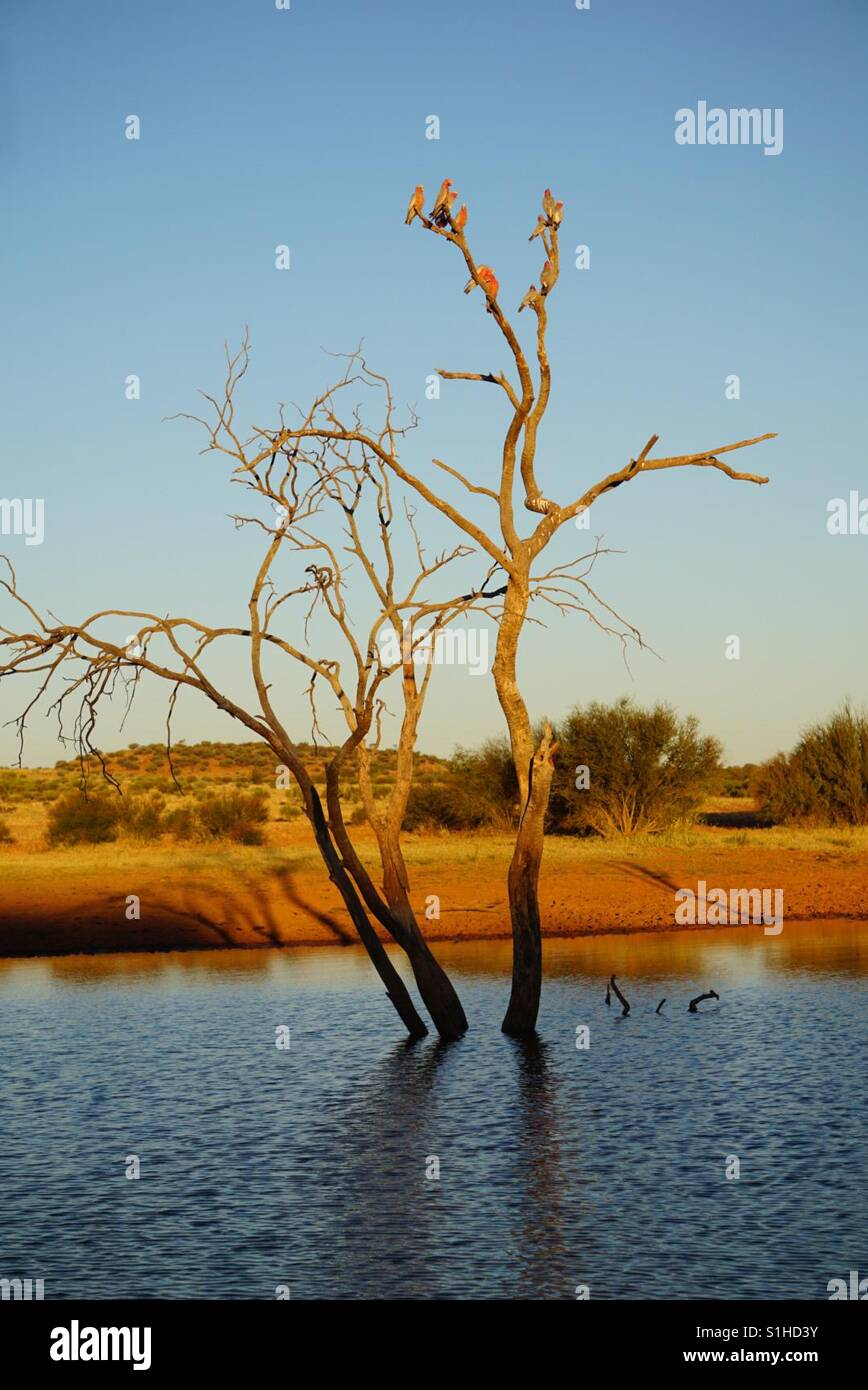 'Willow Sound' Titjikala, Alice Springs Australia - Stock Image