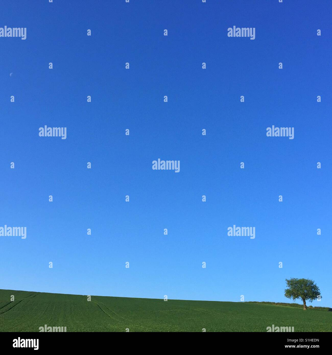 Tree and a tiny moon set against a clear blue sky. - Stock Image