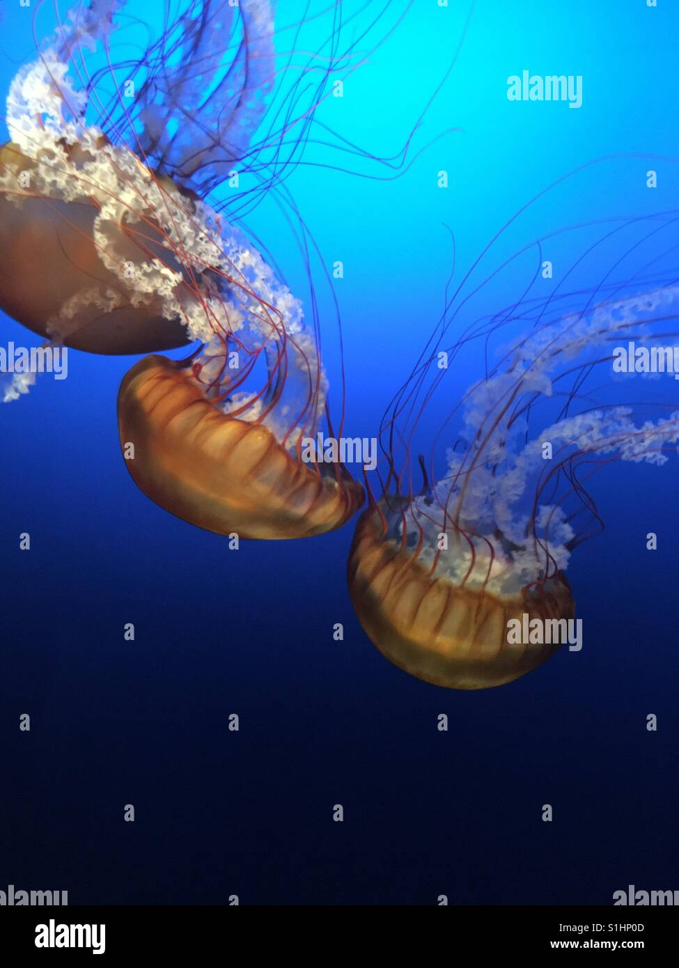 Jellyfish colors - Stock Image