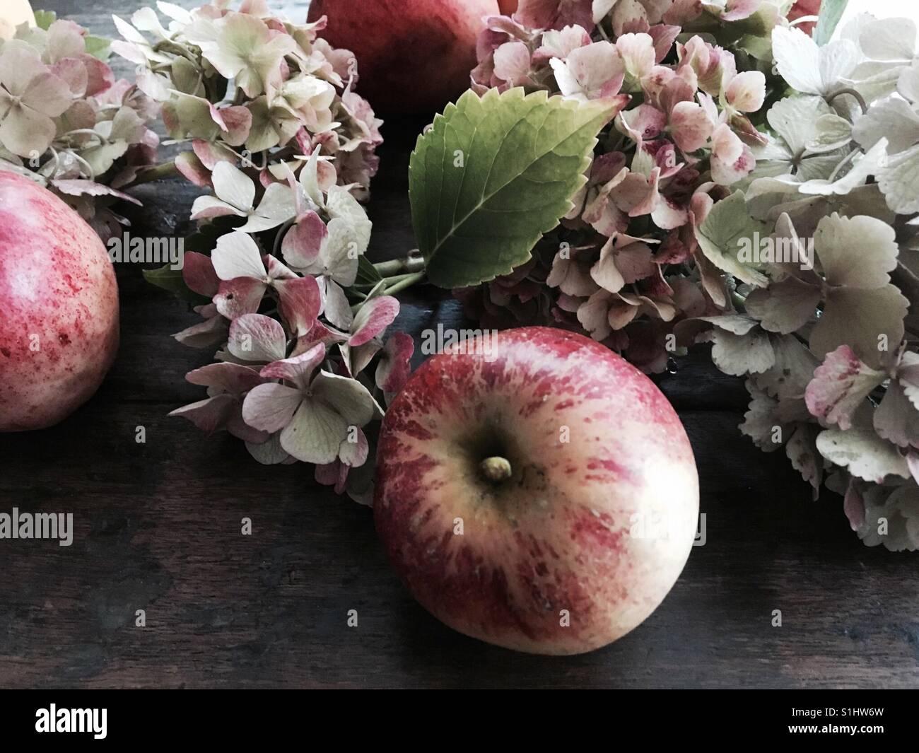 Autumn apple and hydrangeas - Stock Image