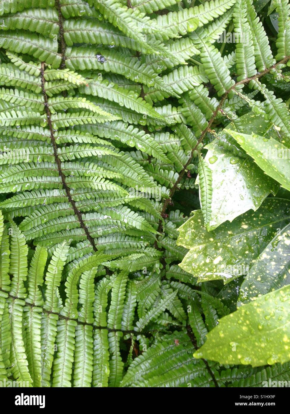 Fern leaves spiralling up and shrub, Stock Photo