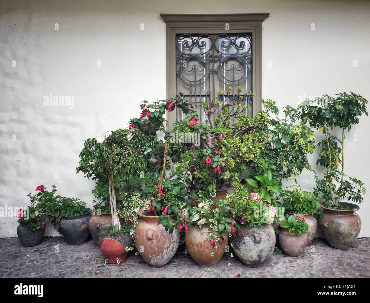 Beautiful arrangements of plants in old pottery in Cusco, Peru - Stock Image