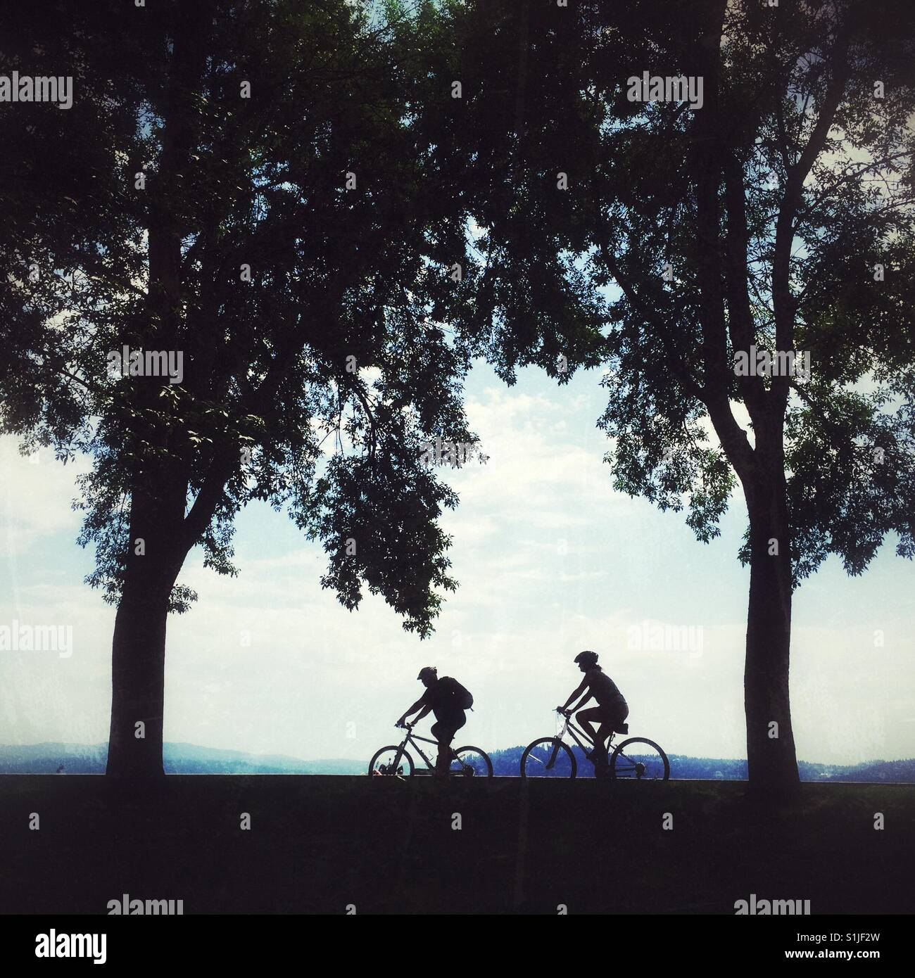 Silhouettes of two bicyclists riding behind the trees near lake Coeur d'Allene in Idaho on a summer day - Stock Image