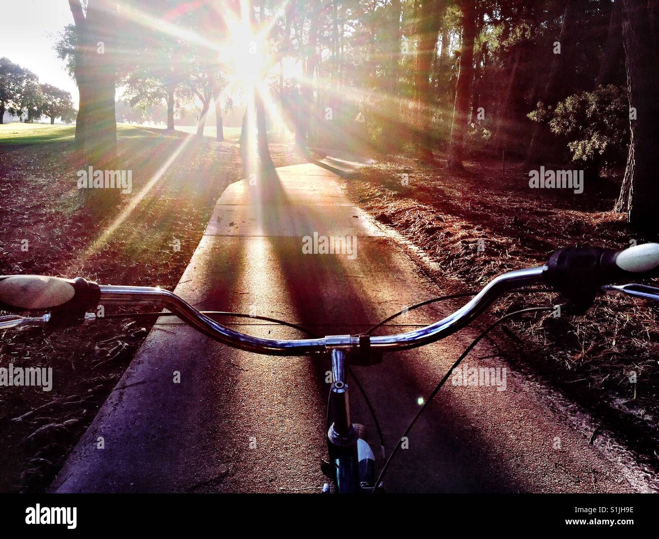 The view of a bike path in early morning light on Kiawah Island, S.C. - Stock Image